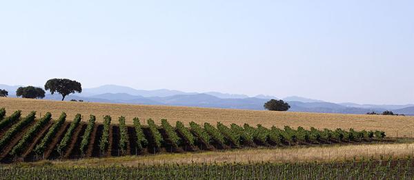 adega-mayor-the-vineyards_1395484074f0ef1f91f949