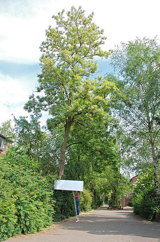 Lichtbomen-trunk-docu-web-2