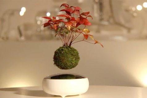 Tu propio momento zen con los bonsáis flotantes de Hoshinchu