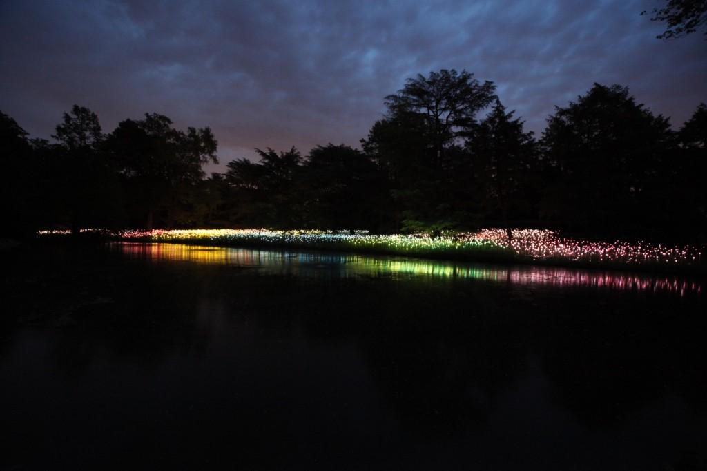 Instalacion luminica Jardin Botánico Longwood