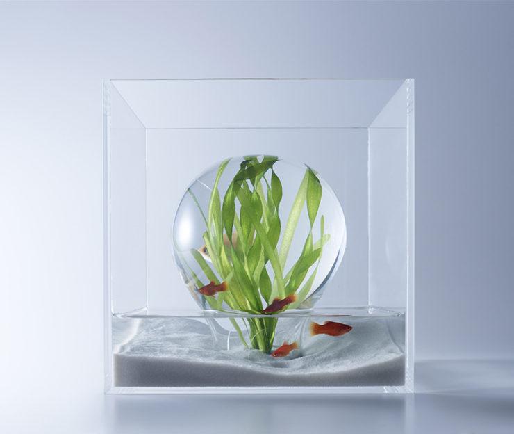 Burbuja de aire en suspension con plantas de watescape