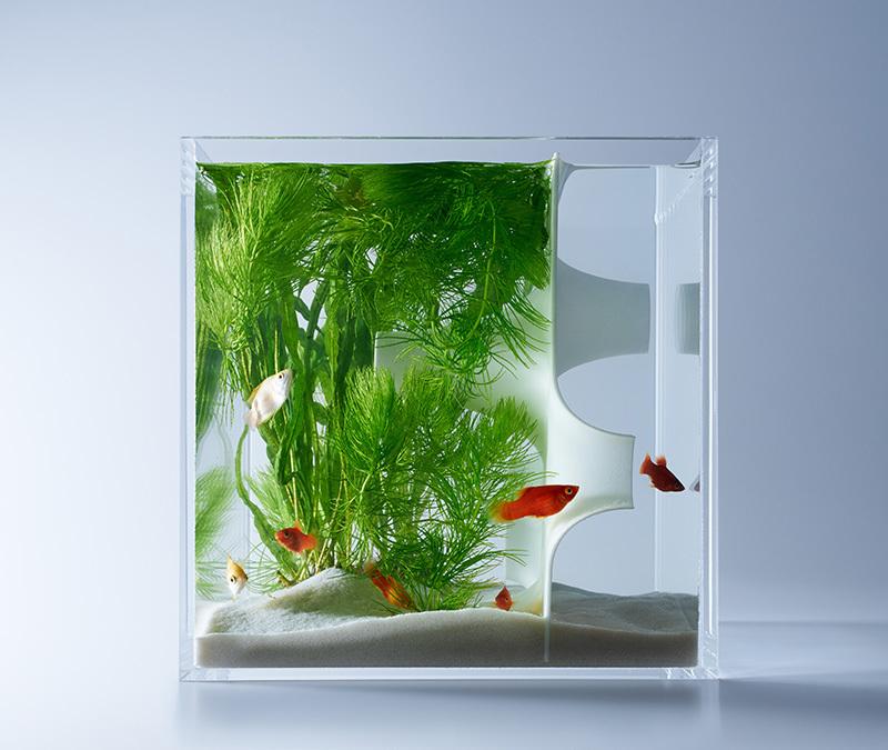 Detalle de acuario con planta y entrada tridimensional de waterscape