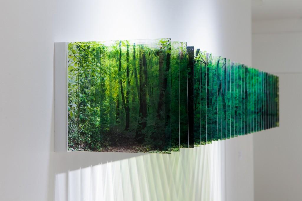 Layer Drawings que reflejan el sendero del bosque