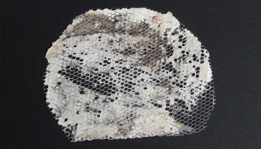 Tejido hecho de micelio proyecto Mycotex