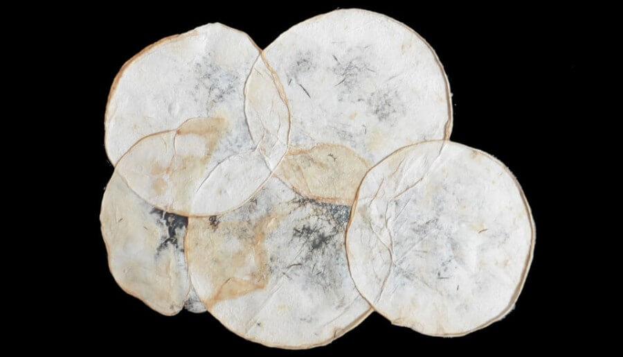 Módulos individuales de micelio proyecto Mycotex