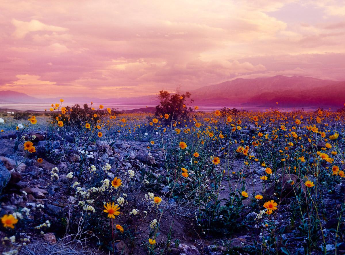 El despertar de la vida (psicodélica) en el Valle de la Muerte