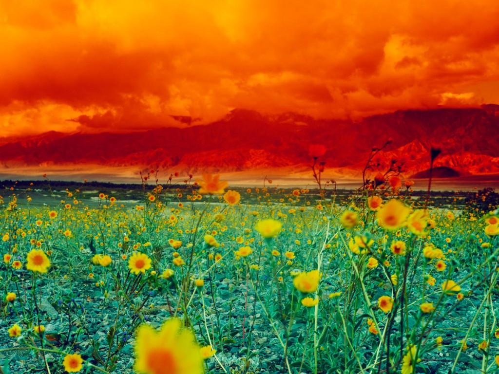 Contraste de colores en la fotografía de Maciek Jasik