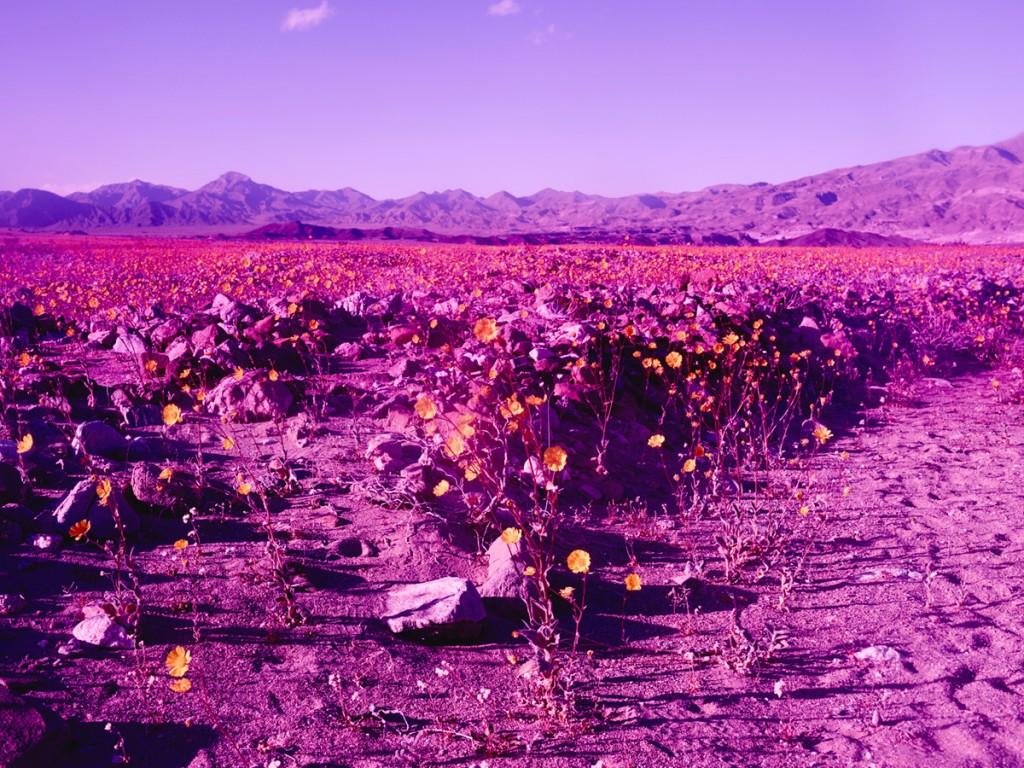 imagen de montañas y estepas rosadas con flores brotando de los surcos