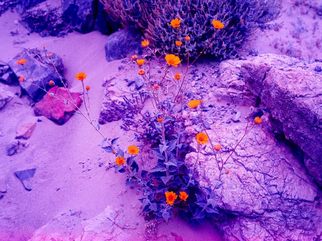 Colores calidos en las flores que contrastan en las imágenes psicoldélicas