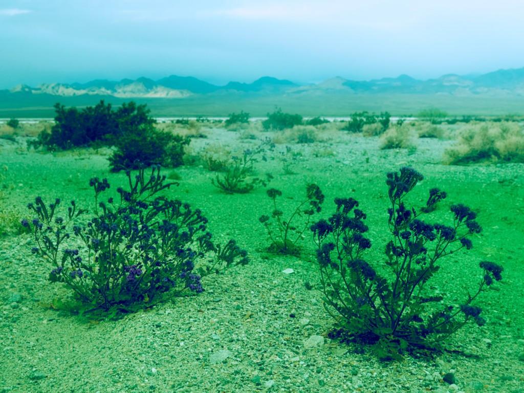 Imagen del desierto de california de Maciek Jasik