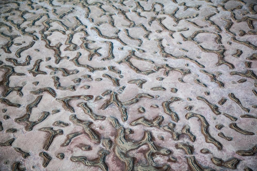 Detalle de formas caprichosas de la naturaleza que parecen un cuadro de arte moderno
