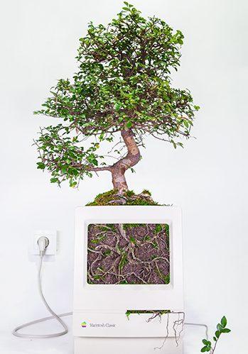 Monsieur Plant revitaliza tu viejo Mac