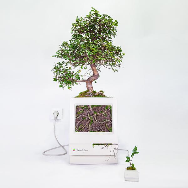 Creación del artista parisino Christophe Guinet, más conocido como Monsieur Plant