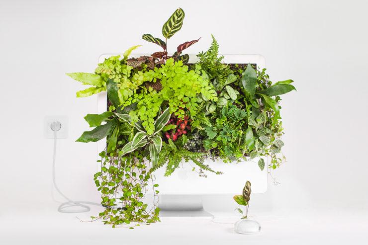 «Plant your Mac!» la naturaleza puede arraigar en cualquier sitio