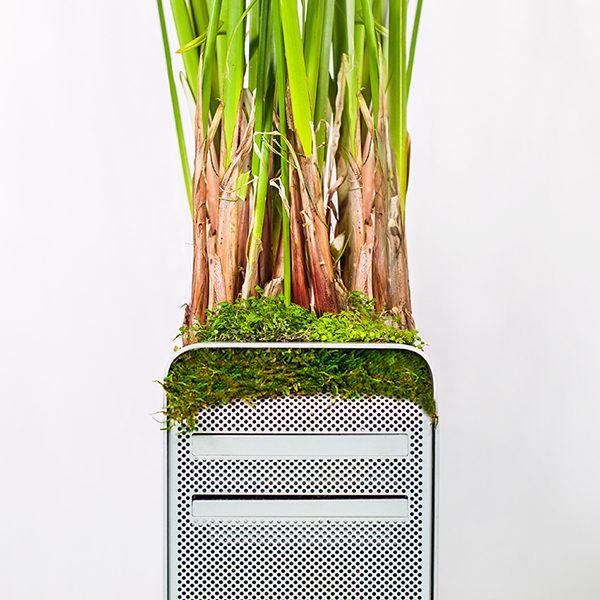 Detalle de la utilización de las plantas para agitar conciencias