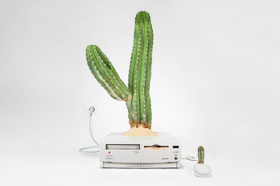Mr Plant ha convertido los viejos Mac en jardines en miniatura
