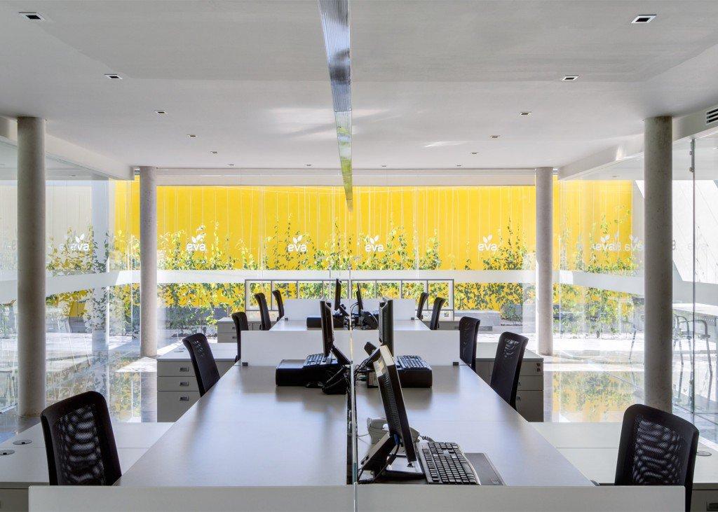 múltiples hileras de plantas trepadoras (de la especie Cissus antarctica) se disponen a modo de laberinto de bancos y cortinas verdes que irán creciendo con el paso del tiempo. Vista desde el interior