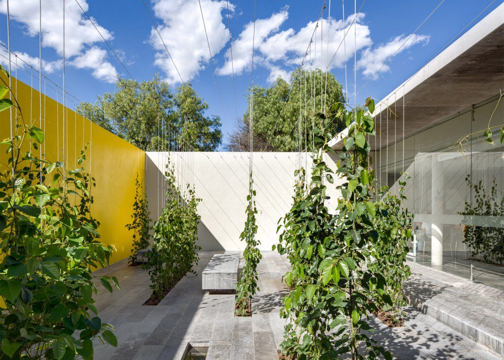múltiples hileras de plantas trepadoras (de la especie Cissus antarctica) se disponen a modo de laberinto de bancos y cortinas verdes que irán creciendo con el paso del tiempo.