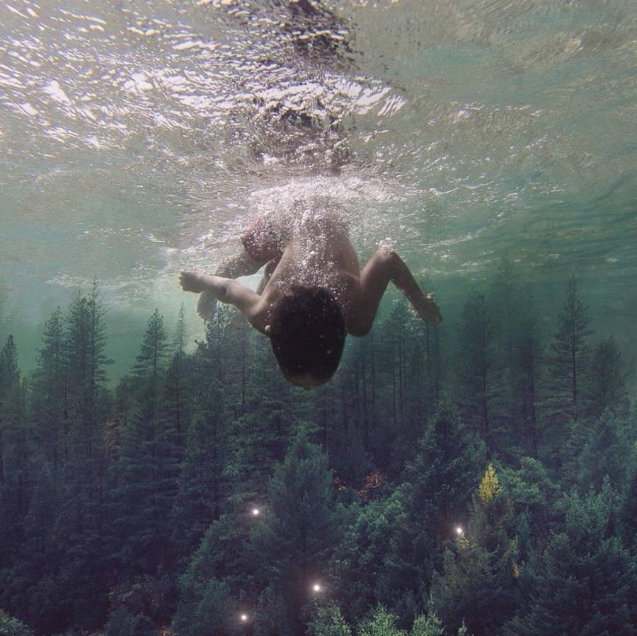 buceando sobre un bosque de coníferas
