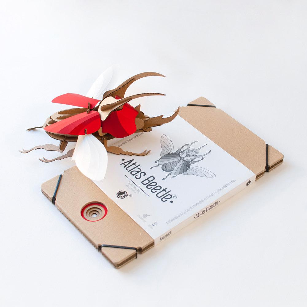 escarabajo rojo atlas con su caja plana
