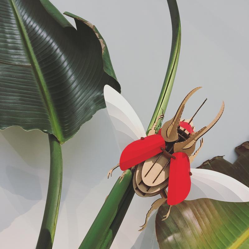 escarabajo rojo atlas