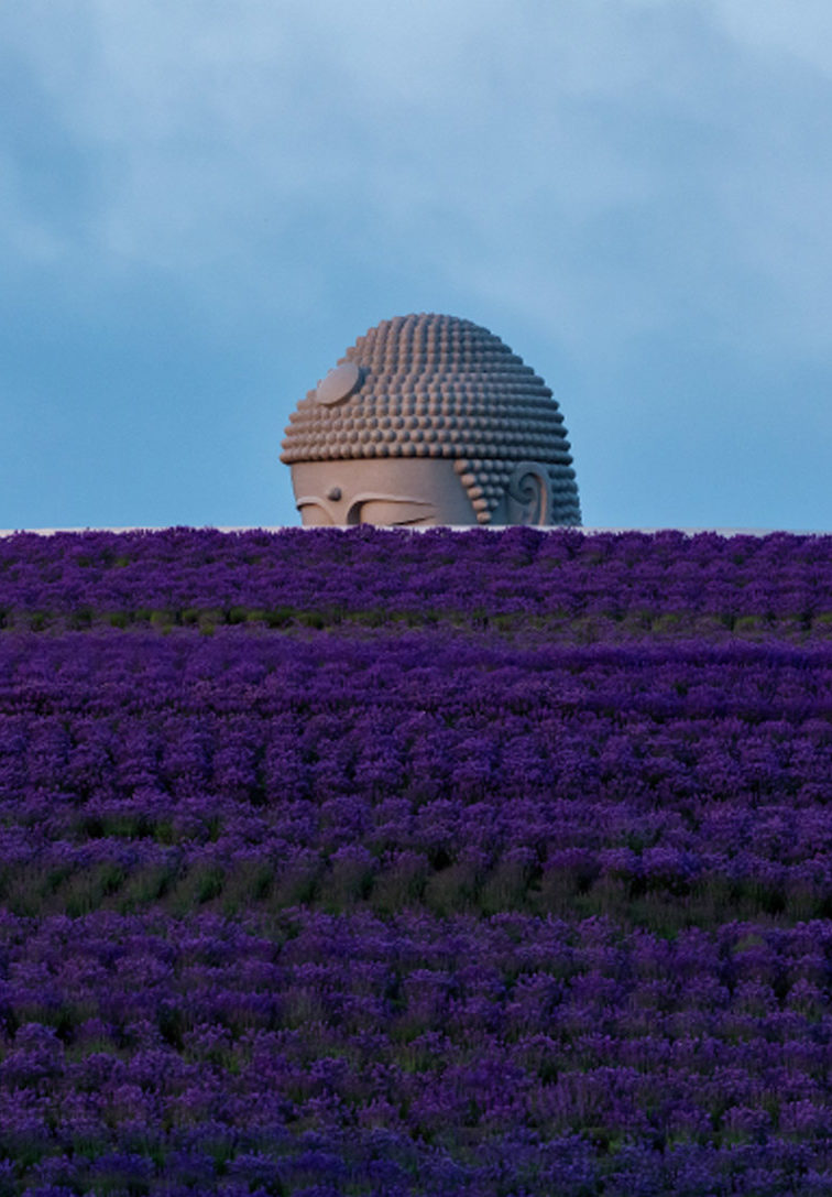 Tadao Ando suaviza la solemnidad de Buda ocultándolo bajo tierra