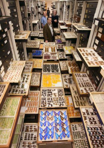 Un fascinante vistazo a las colecciones del Museo Nacional de Historia Natural