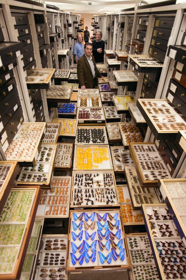 estanterias de mariposas del museo nacional de historia natural