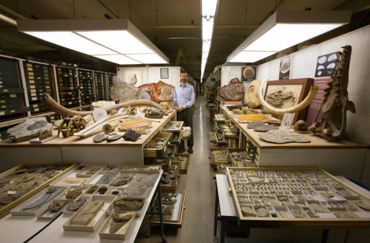 fósiles en el museo nacional de historia natural de estados unidos