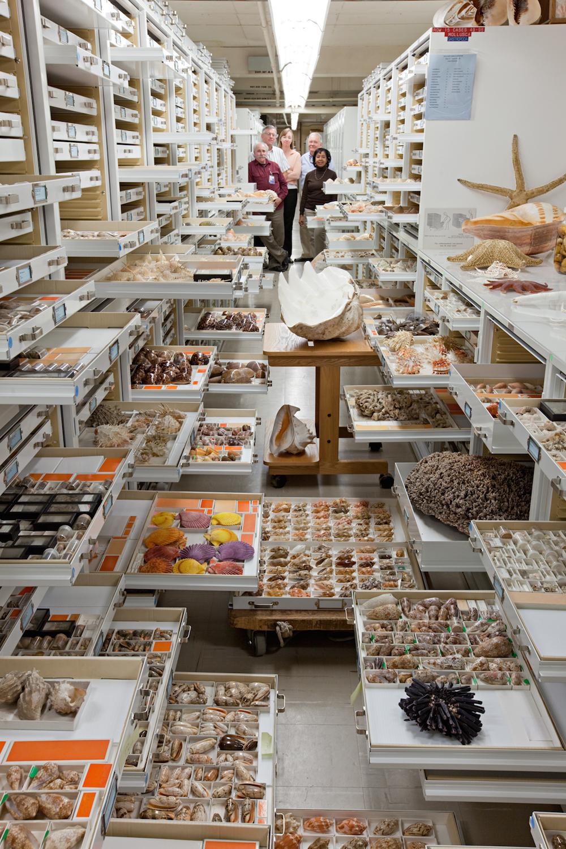 fosiles de la colección de museo nacional de historia de la naturaleza