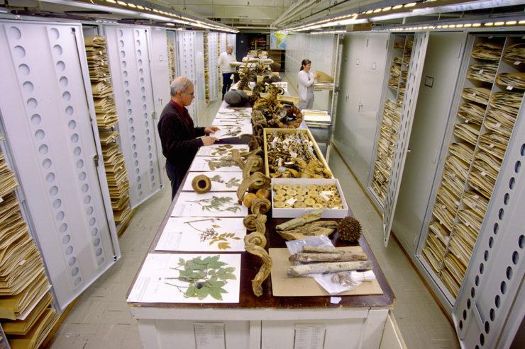 coleccion botanica del museo de historia natural de estados unidos