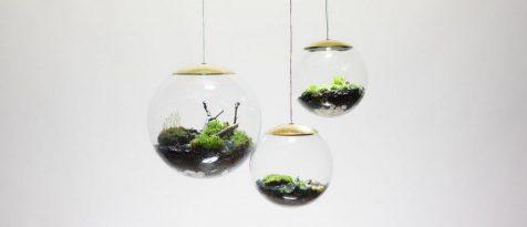 Globe proporciona cultivos de altura para iluminar nuestros hogares