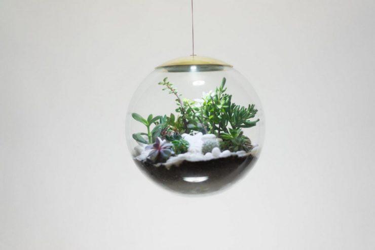 detalle del terrario, lampara globe diseñada por estudio richard clarkson