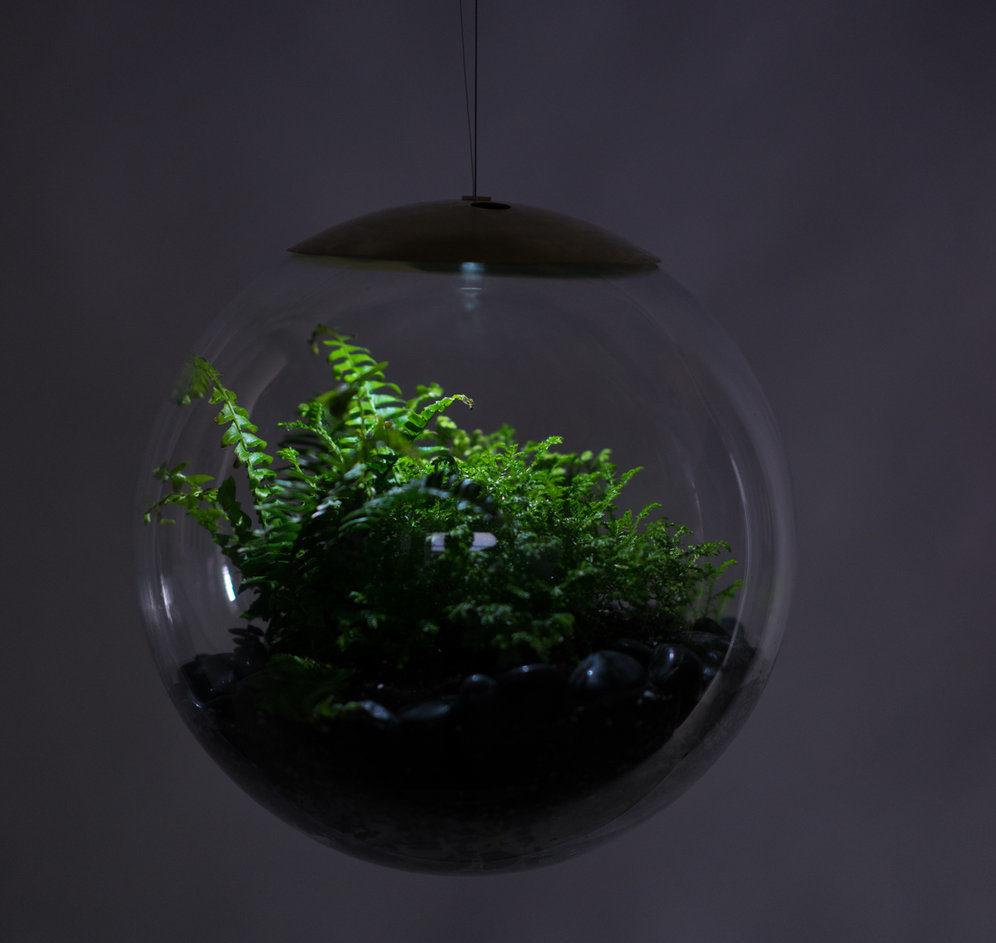 intensidad de luz led según las plantas