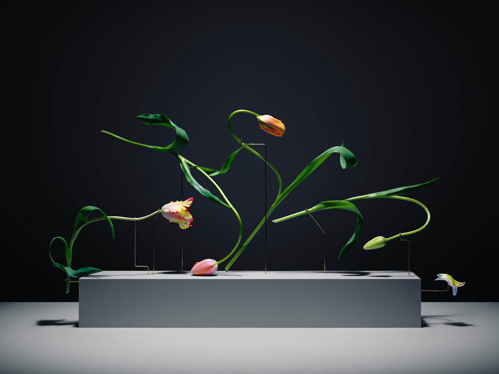 serie postures, los tulipanes en movimiento de Carl Keiner