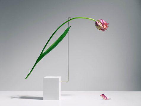 La danza de los tulipanes fotografiada por Carl Kleiner