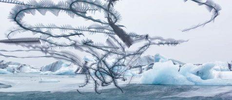 Ornitografías, las misteriosas estelas volantes captadas por Xavi Bou