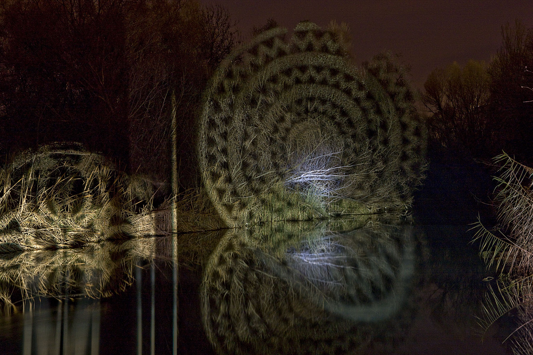 círculos concéntricos, en la naturaleza fotografía de javier riera