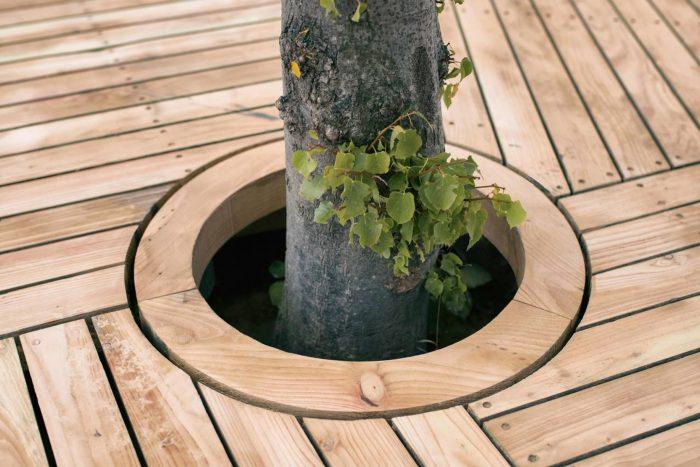 detalle del tilo de casi 2 m plantado en el centro de la isla