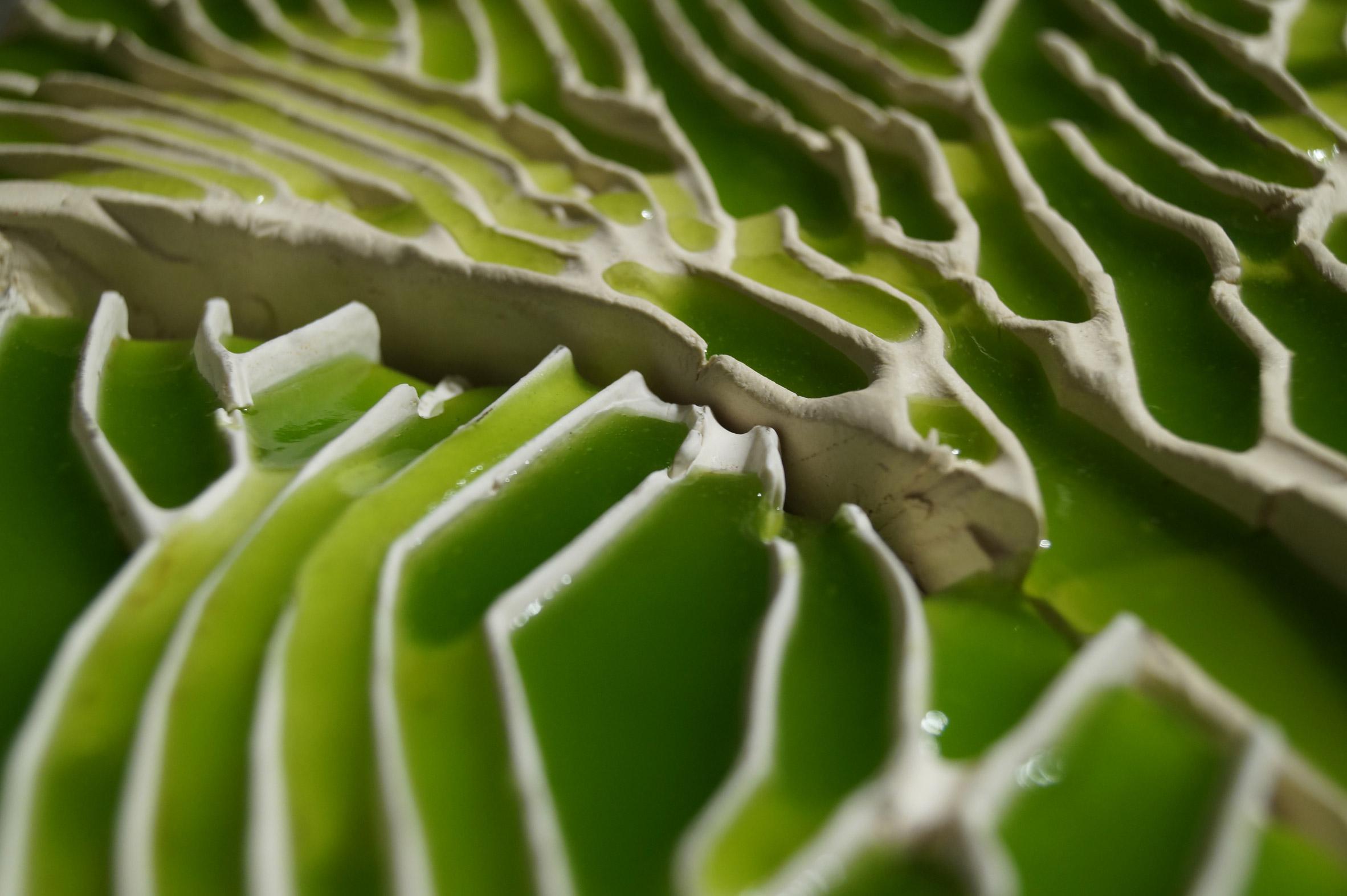 detalle de los canales un hidrogel llenos de microalgas