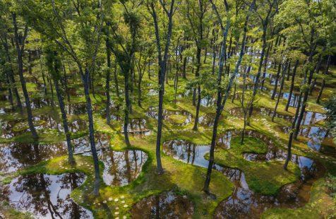 Junya Ishigami rescata docenas de árboles para crear un paisaje poético fluido.
